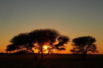 Tierparadies Botswana - Ein Vortrag von Edgar Krapp